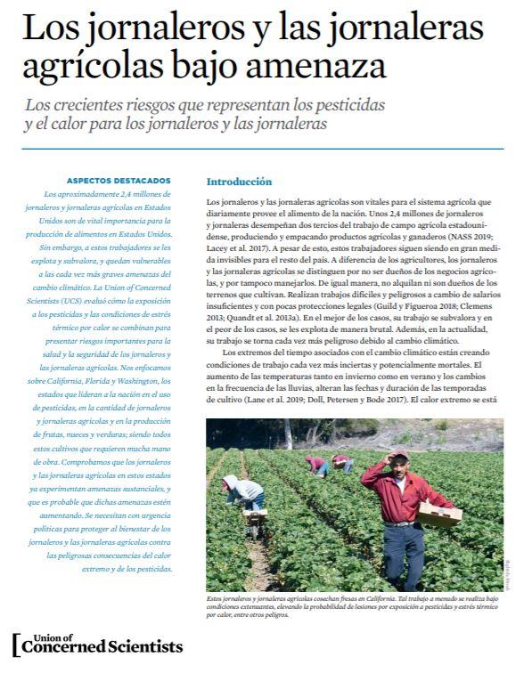 Jornaleros cosechan fresas en California